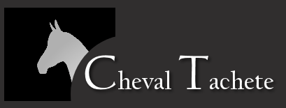 Guest House Accommodation Cullinan : Cheval Tachete